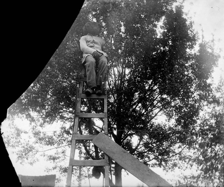 Fruit tree picking