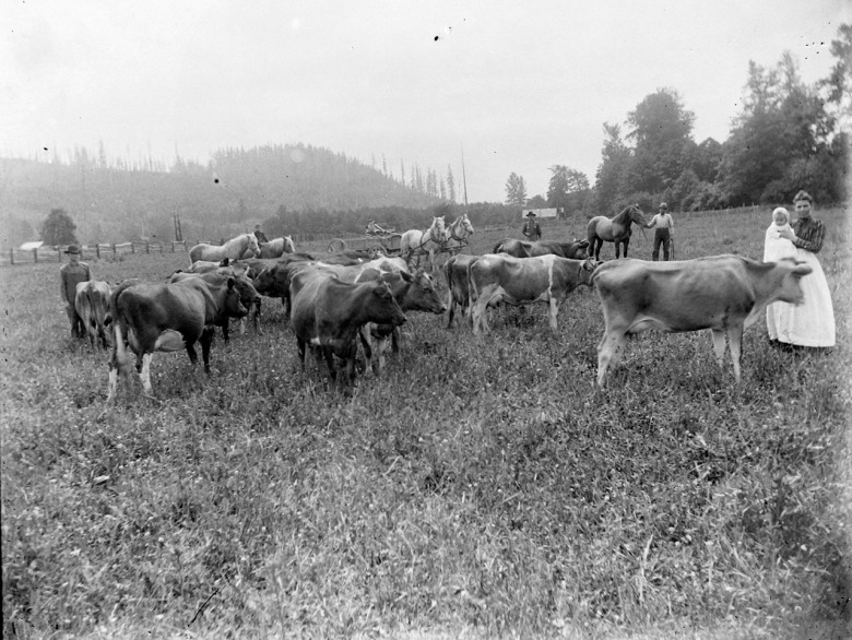 IMG_5815_Cows_Horses_Buggy_Men_Woman_Baby_Field